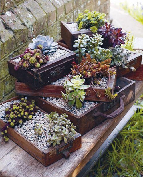Kwietnik ogrodowy na rośliny
